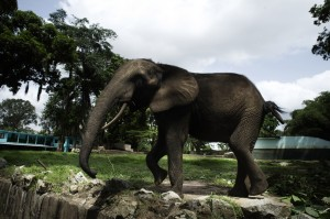 Michael Zumstein - 3 - Ivory Coast - Elephant
