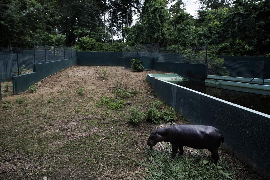 Michael Zumstein - 6 - Ivory Coast - Hippo