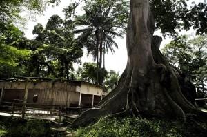 Michael Zumstein - 8 - Ivory Coast - Zoo