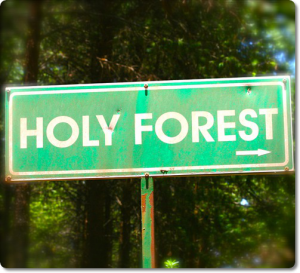 holy forest edit crop