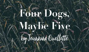 Four Dogs, Maybe Five, by Jeannine Ouellette